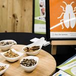 Animation bar à insectes, bar à thème